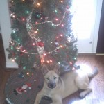 Did You Get A Christmas Puppy?