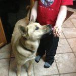 Dakota Loves Grandma Lucy's Dog Food