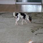 Trixie Wins Organic Dog Treats On BlogWithMom