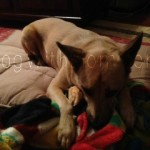 Dakota Says You WANT to Win The Wash'n Zip Pet Bed ENDS 10/7