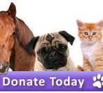 Guest Post: Top Tips For Donating To An Animal Charity