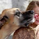 dog-licking-face