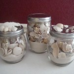Display The Shells From Your Summer Vacation