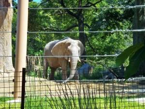 elephant zoo