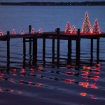20% Off CRAB POT Christmas Trees